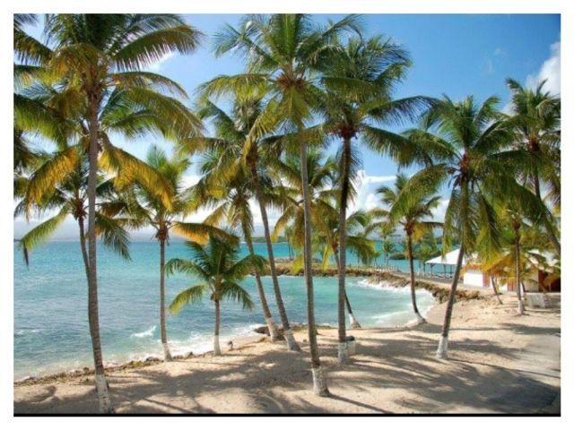Locação Apartamentos 8006 Gosier (Guadeloupe)