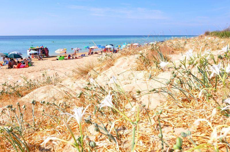 Vista desde do alojamento Locação Vivenda 114625 Pescoluse