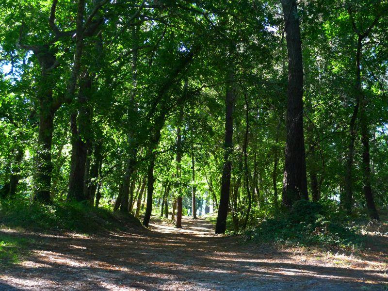 Vista dos arredores Locação Mobil Home 31432 Biscarrosse