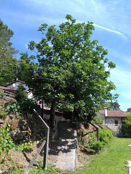 Vista do terraço Locação Casa de turismo rural/Casa de campo 39668 São Pedro do Sul