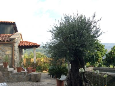 Jardim Loca��o Casa de turismo rural/Casa de campo 62019 Arcos de Valdevez