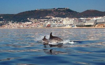 Praia Loca��o Est�dio 88599 Sesimbra