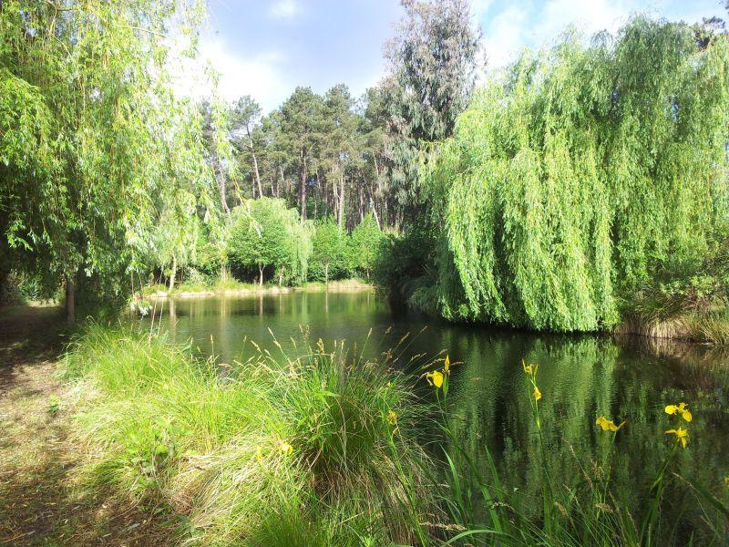 Jardim Locação Moinho 104036 Léon