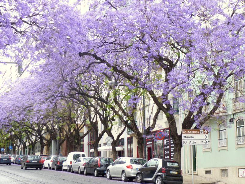 Vista dos arredores Locação Apartamentos 106237 Lisboa