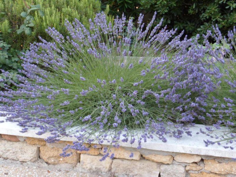 Jardim Locação Casa 91300 Aix en Provence